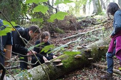 Wildniswoche - Survival Basics Ressourcen finden